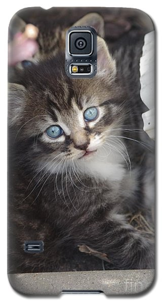 Galaxy S5 Case featuring the photograph Blue Eyes by Tannis  Baldwin