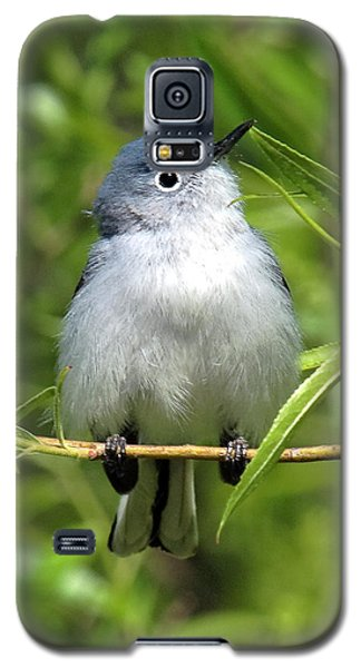 Galaxy S5 Case featuring the photograph Blue-gray Gnatcatcher Dsb147 by Gerry Gantt