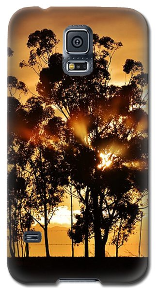 Blue Gum Trees Galaxy S5 Case