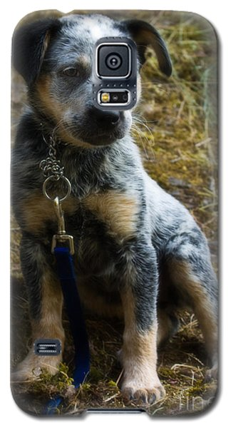 Blue Heeler Pup Galaxy S5 Case