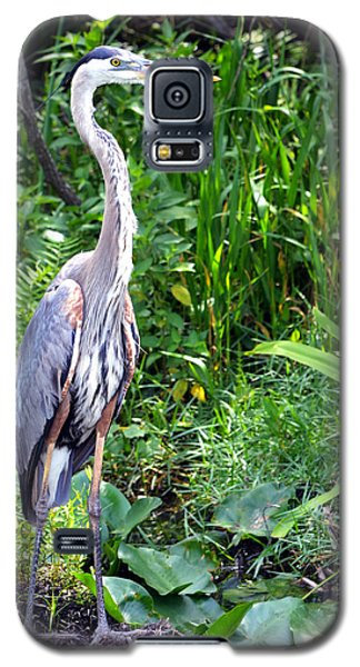 Galaxy S5 Case featuring the photograph Blue Heron At The Everglades by Pravine Chester