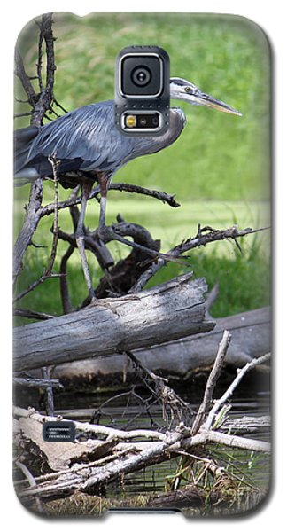 Blue Heron At The Lake Galaxy S5 Case