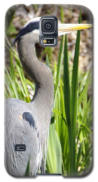 Galaxy S5 Case featuring the photograph Blue Heron by Marilyn Wilson