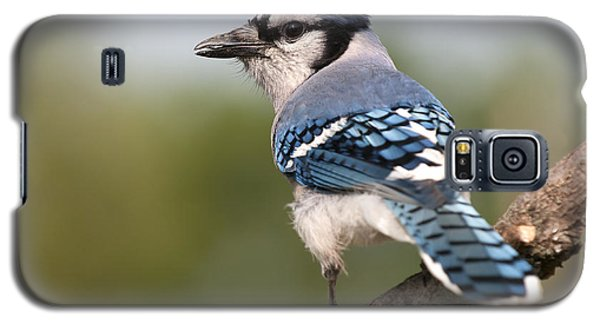 Galaxy S5 Case featuring the photograph Blue Jay by Art Whitton