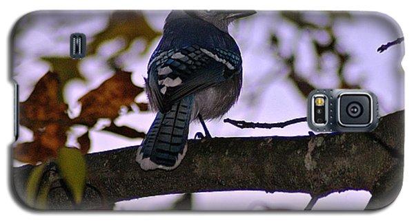 Blue Jay Galaxy S5 Case by Joe Faherty