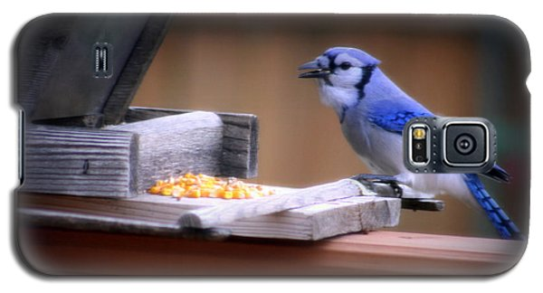 Galaxy S5 Case featuring the photograph Blue Jay On Backyard Feeder by Kay Novy