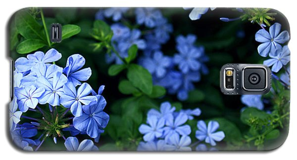 Blue Plumbago Galaxy S5 Case by Barbara Middleton