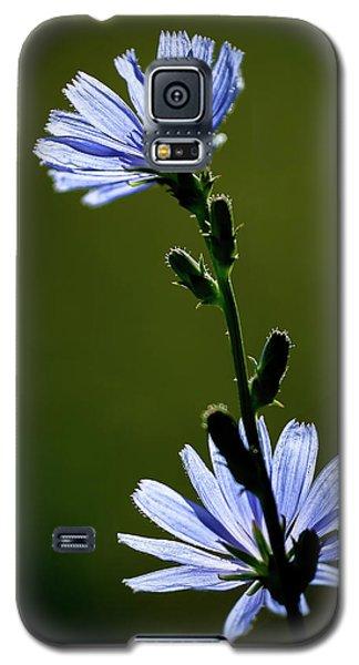 Blue Wildflower Galaxy S5 Case