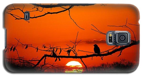 Bluebird Dawn Galaxy S5 Case
