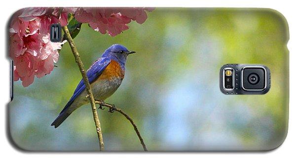 Bluebird In Cherry Tree Galaxy S5 Case