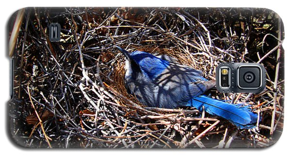 Galaxy S5 Case featuring the photograph Bluebird In Her Nest by Susanne Still