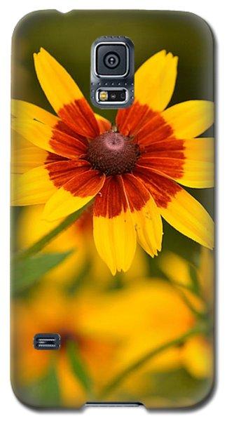 Blush-eyed Susan Galaxy S5 Case by JD Grimes
