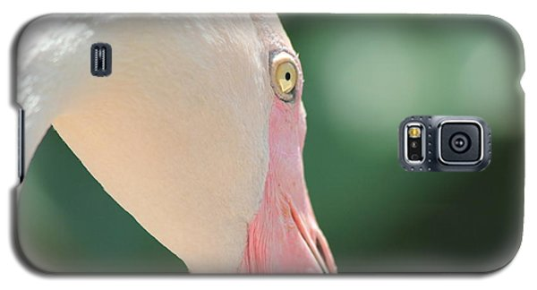 Galaxy S5 Case featuring the photograph Blushing Flamingo by Nola Lee Kelsey