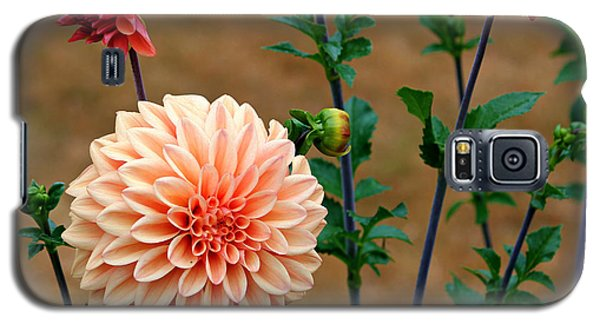 Galaxy S5 Case featuring the photograph Bodaciously Orange by Jeanette C Landstrom