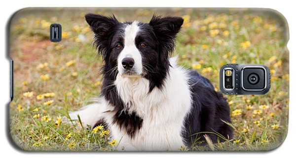 Border Collie In Field Of Yellow Flowers Galaxy S5 Case