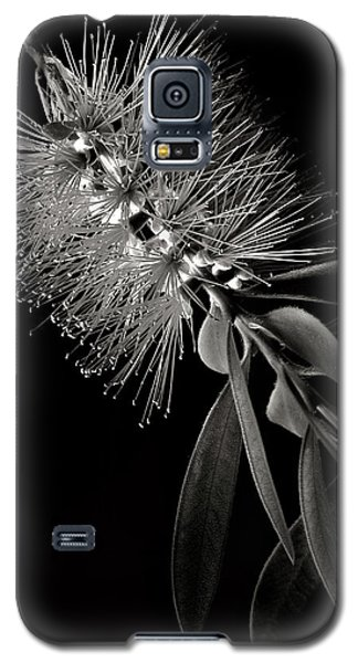 Bottlebrush In Black And White Galaxy S5 Case