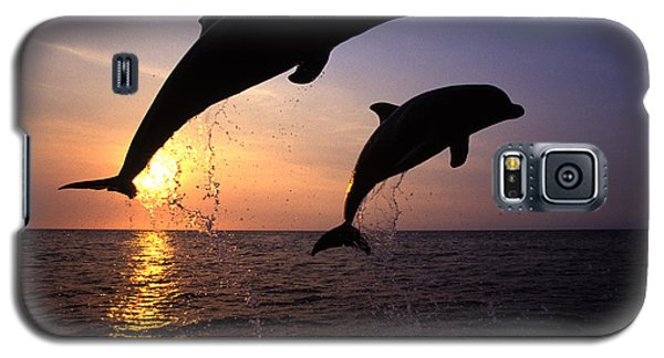 Dolphin Galaxy S5 Case - Bottlenose Dolphins by Francois Gohier and Photo Researchers