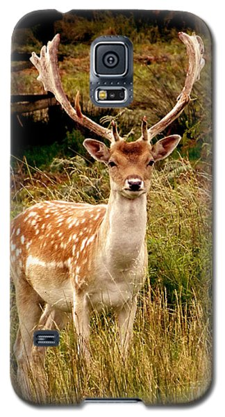 Wildlife Fallow Deer Stag Galaxy S5 Case by Linsey Williams