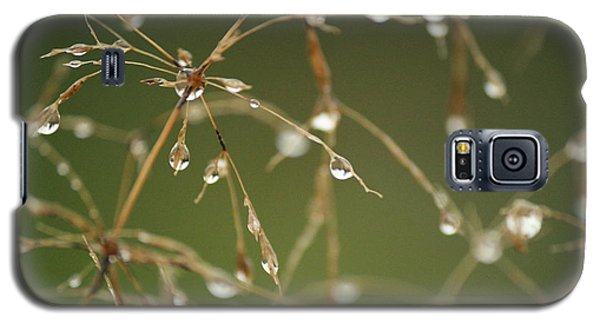Branches Of Dew Galaxy S5 Case
