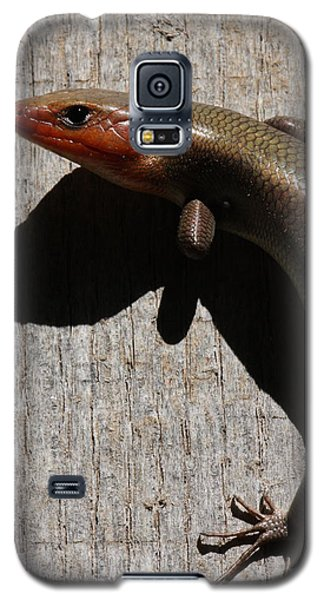 Galaxy S5 Case featuring the photograph Broad-headed Skink On Barn  by Daniel Reed