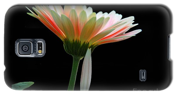 Galaxy S5 Case featuring the photograph Broken Daisy by Cindy Manero