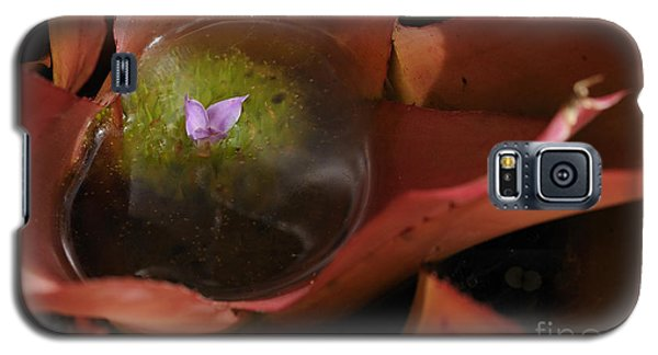 Bromeliad - The Garden Has Secrets Galaxy S5 Case