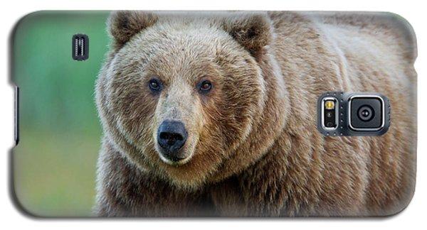 Brown Bear  Galaxy S5 Case