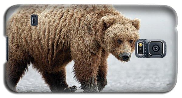 Brown Bear Stare Galaxy S5 Case