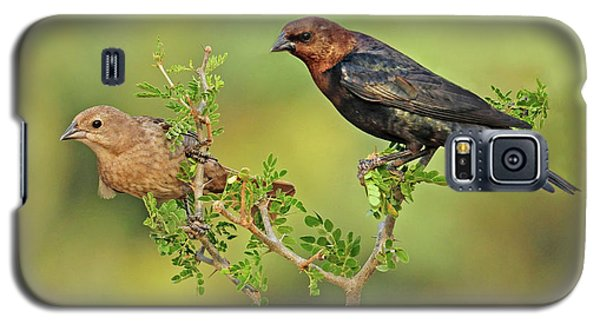 Brown Headed Cowbird Pair Galaxy S5 Case