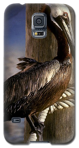 Galaxy S5 Case featuring the photograph Brown Pelican In Key West 9l by Gerry Gantt