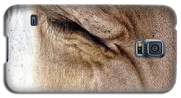 Ohio Galaxy S5 Case - Brown Swiss Cow by Natasha Marco