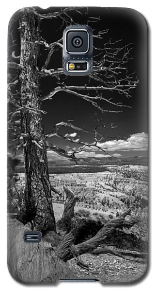 Bryce Canyon - Dead Tree Black And White Galaxy S5 Case