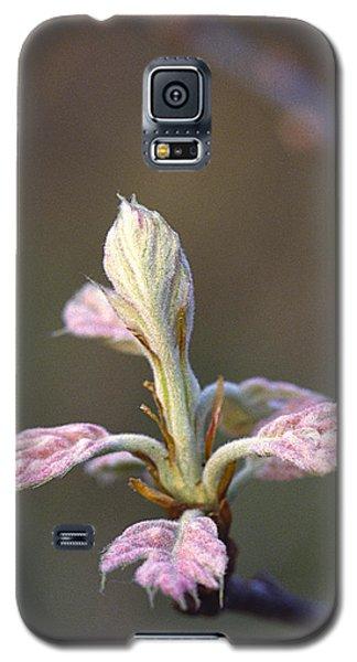 Budding Oak Leaves Galaxy S5 Case