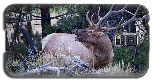 Bugling Bull Elk Galaxy S5 Case