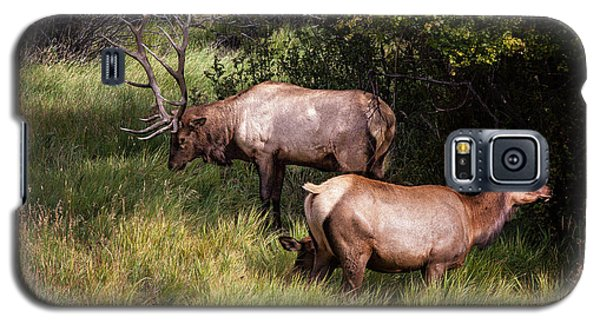 Bull Elk 7x7 Galaxy S5 Case