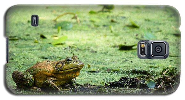 Bull Frog Galaxy S5 Case