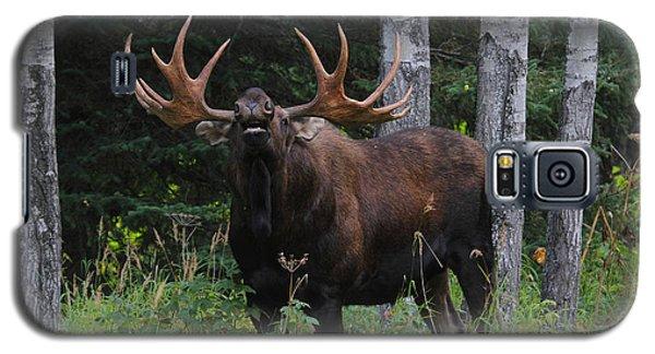 Bull Moose Flehmen Galaxy S5 Case
