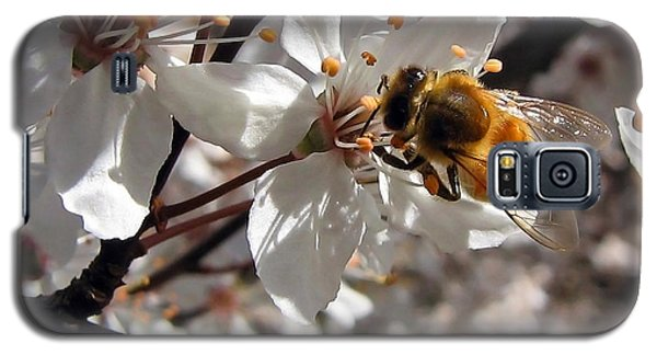 Bumble Bee On A Cherry Blossom Galaxy S5 Case