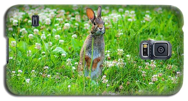 Bunny Galaxy S5 Case