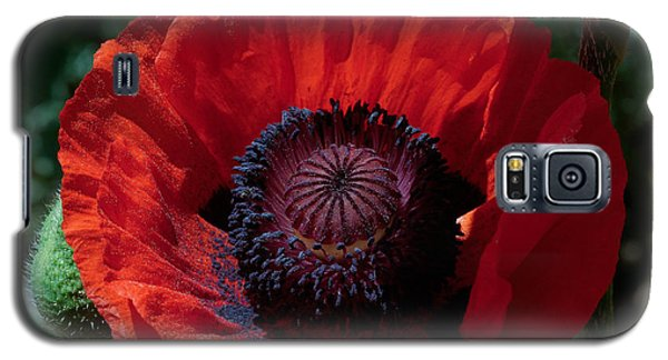 Galaxy S5 Case featuring the photograph Burning Poppy by Mitch Shindelbower