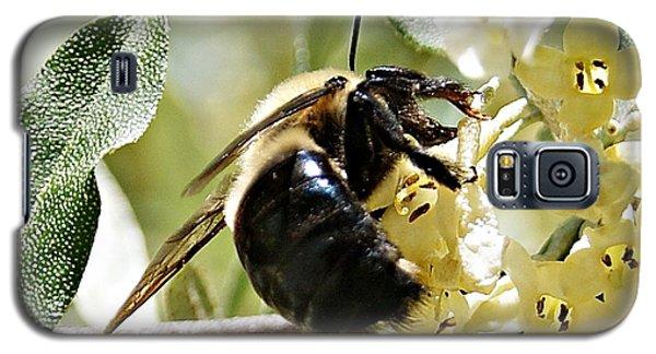 Busy As A Bee Galaxy S5 Case by Joe Faherty