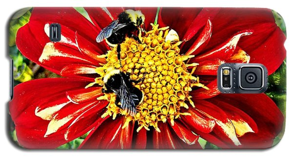 Galaxy S5 Case featuring the photograph Busy Bees by Nick Kloepping