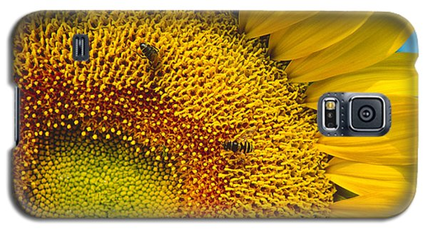 Busy Sunflower Galaxy S5 Case