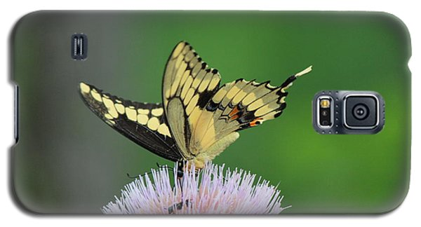 Galaxy S5 Case featuring the photograph Butterflies Are Free by Kathy  White