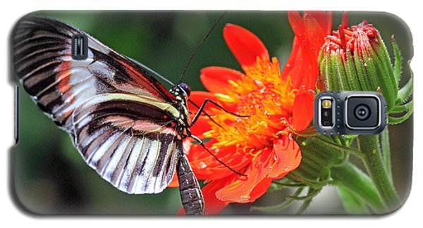Galaxy S5 Case featuring the photograph Butterfly - Orange by Larry Nieland