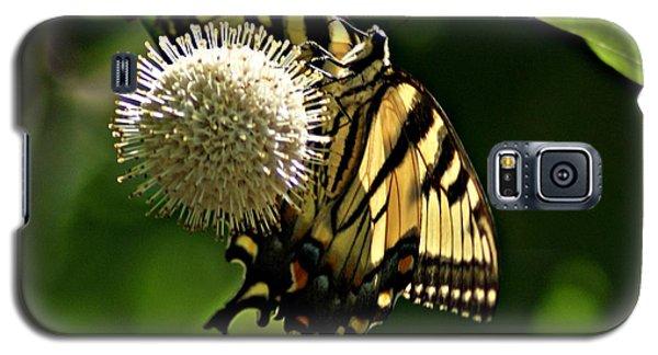 Butterfly 2 Galaxy S5 Case by Joe Faherty