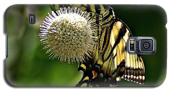 Butterfly 3 Galaxy S5 Case by Joe Faherty