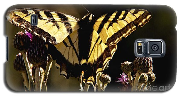 Butterfly And Thistle II Galaxy S5 Case by Angelique Olin