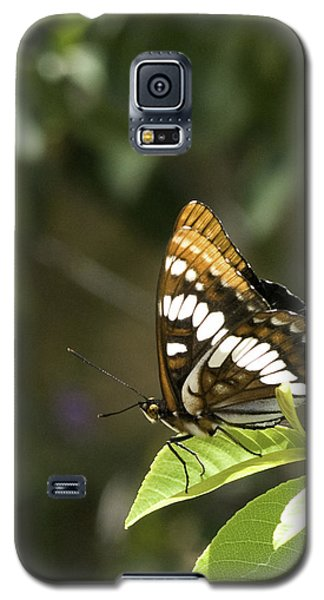 Galaxy S5 Case featuring the photograph Butterfly At Rest by Betty Depee