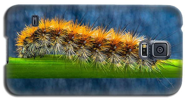 Butterfly Caterpillar Larva On The Stem Galaxy S5 Case